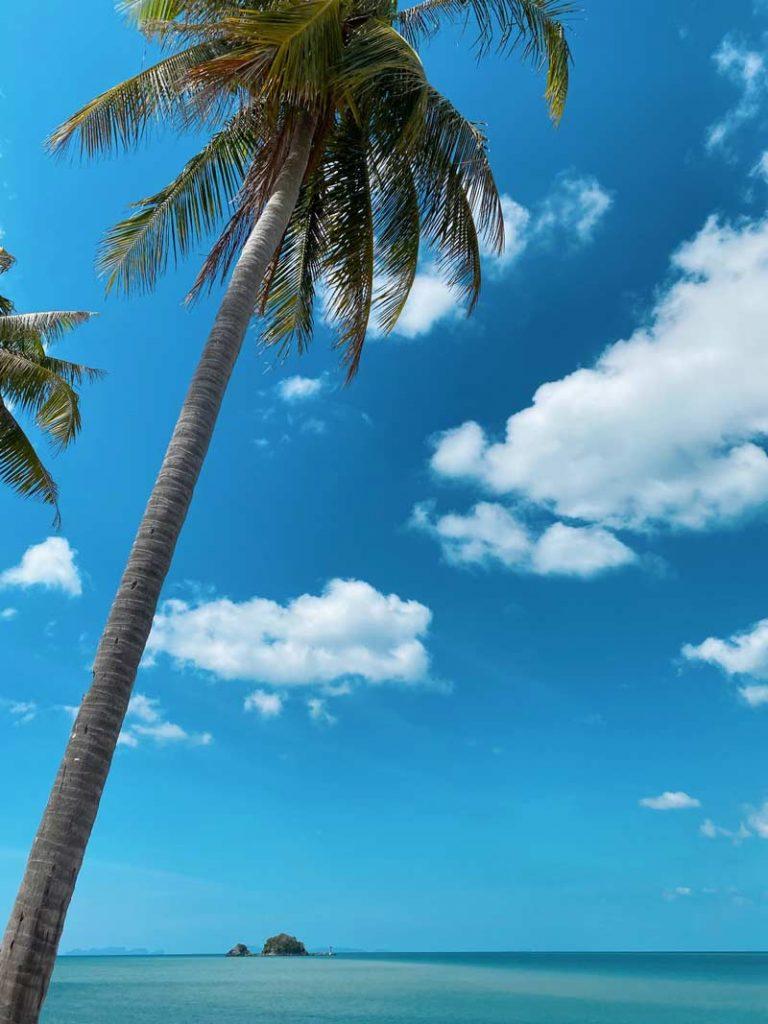 Thaimaan palmut